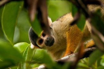 Animales salvajes del Amazonas alimentan tráfico internacional, denuncia nuevo informe