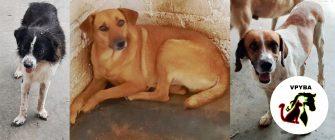 Veeduría animalista denunció la mala gestión de la Alcaldía de Ibagué en el tema de protección animal