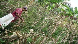 Participe en las jornadas de afiliación al régimen subsidiado de salud en la zona rural