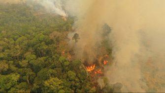 Los incendios forestales de 2020 podrían ser peores que en 2019 a nivel mundial, advierte WWF