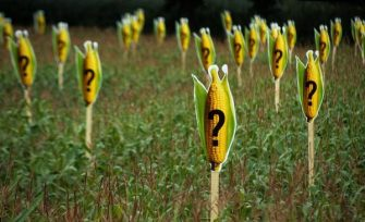Ley que prohíbe uso de semillas transgénicas pasa el primer debate