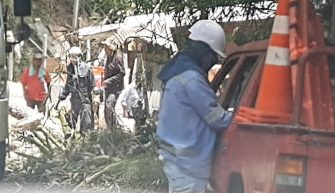 Habitantes de la Martinica denuncian tala de árboles en zona de riesgo ecosistémico