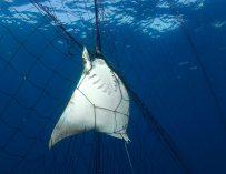 Las redes de pesca abandonadas en el mar son la basura plástica más mortal para la vida marina