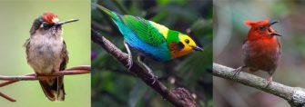 Destrucción de bosques húmedos de Ibagué amenazan la vida de aves endémicas
