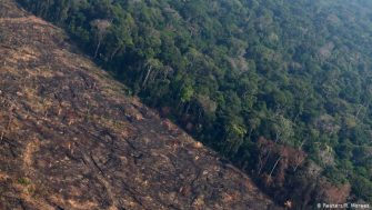 Deforestación en Amazonía alcanza el mayor nivel desde 2008