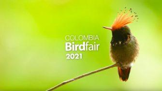 Colombia Birdfair 2021 se realizará a partir del 11 de febrero de manera virtual