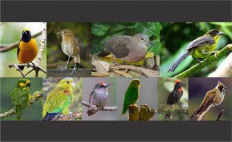 Aves emblemáticas del Tolima fueron declaradas símbolo del patrimonio ecológico y cultural del departamento