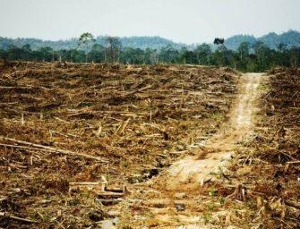 DESASTRE AMBIENTAL EN PUERTO GAITAN, META