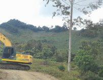 Aguacate Hass en el Quindío: Deforestación y Sequía