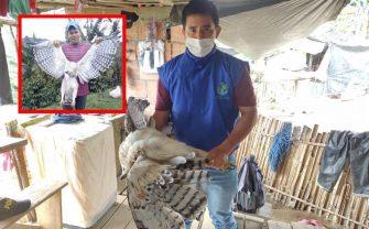 Detienen al sujeto que acabo con la vida del Águila Real de Montaña en San Antonio (Tolima)