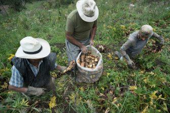 Aprobado proyecto de ordenanza que fortalece el comercio justo del campesinado Tolimense