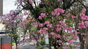 """""""Lluvia de flores"""" en Ibagué"""