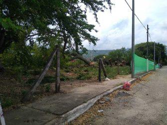 Arboricidio en Venadillo, Tolima.